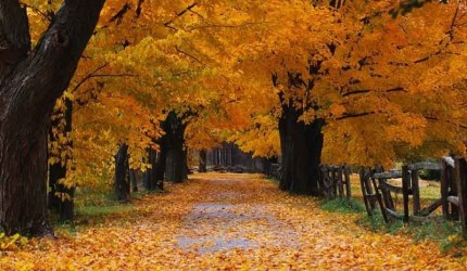 Autumn Wallpaper Widescreen