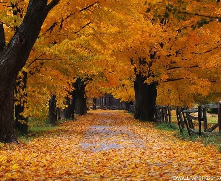 fall wallpaper widescreen monitor - photo #40