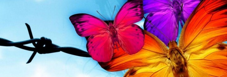 butterfly-wallpapers-for-android
