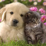 Cats and Dog Wallpaper