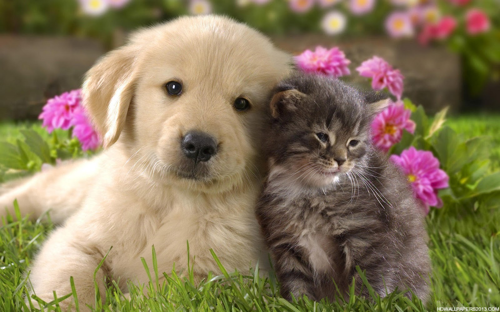 puppies and kitten pictures