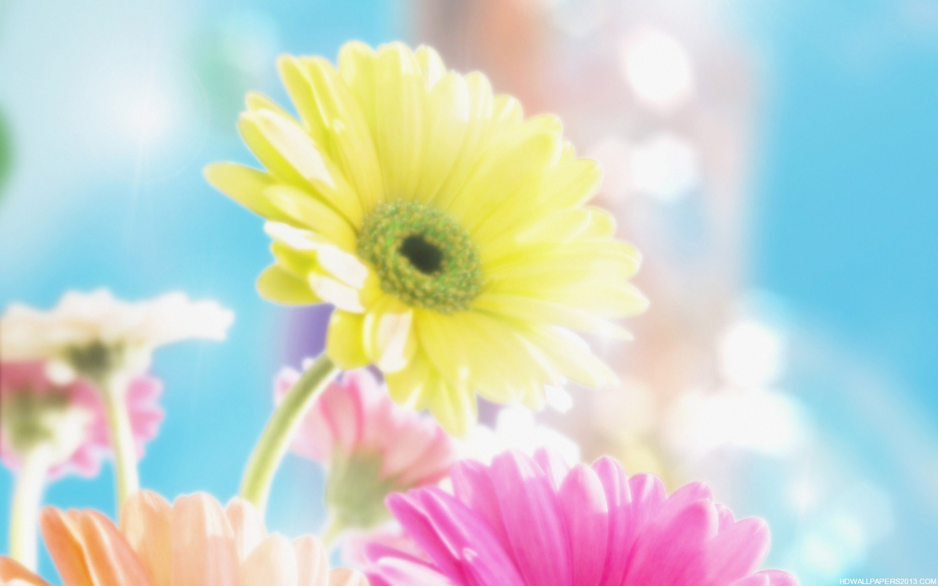 spring clipart background - photo #48
