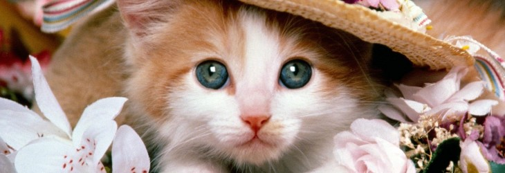 cute-cats-wallpapers
