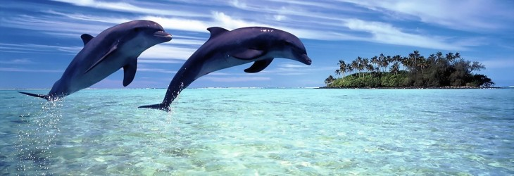 dolphin-wallpapers-hd-backgrounds