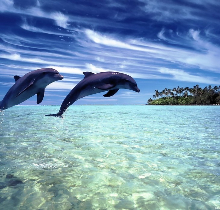 Dolphin Wallpapers HD Backgrounds