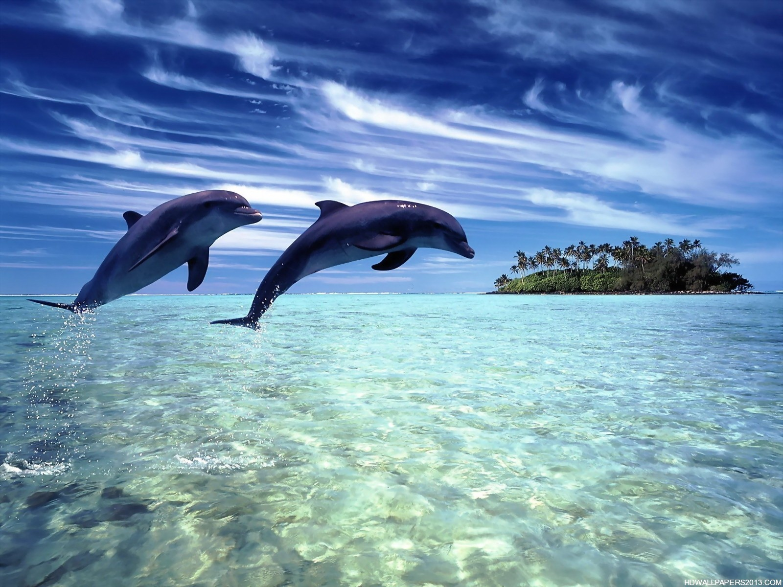 Dolphin wallpapers hd backgrounds high definition wallpapers high dolphin wallpapers hd backgrounds voltagebd Image collections