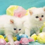 White Cats Wallpaper