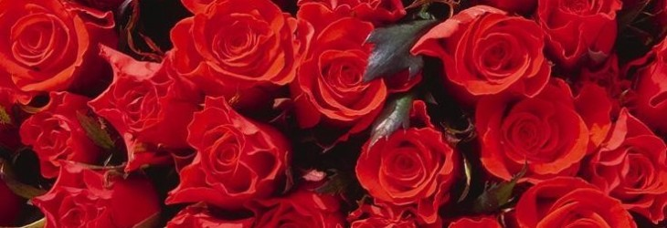 beautiful-roses-pictures
