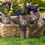 Cats Wallpaper free Download