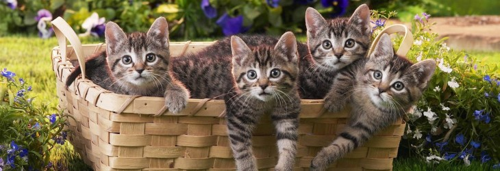 cats-wallpaper-free-download