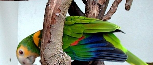 colorful-parrot-types