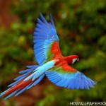 colorful parrots 150x150 Parrot Wallpapers