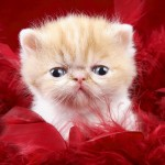 Cute Cat Wallpapers