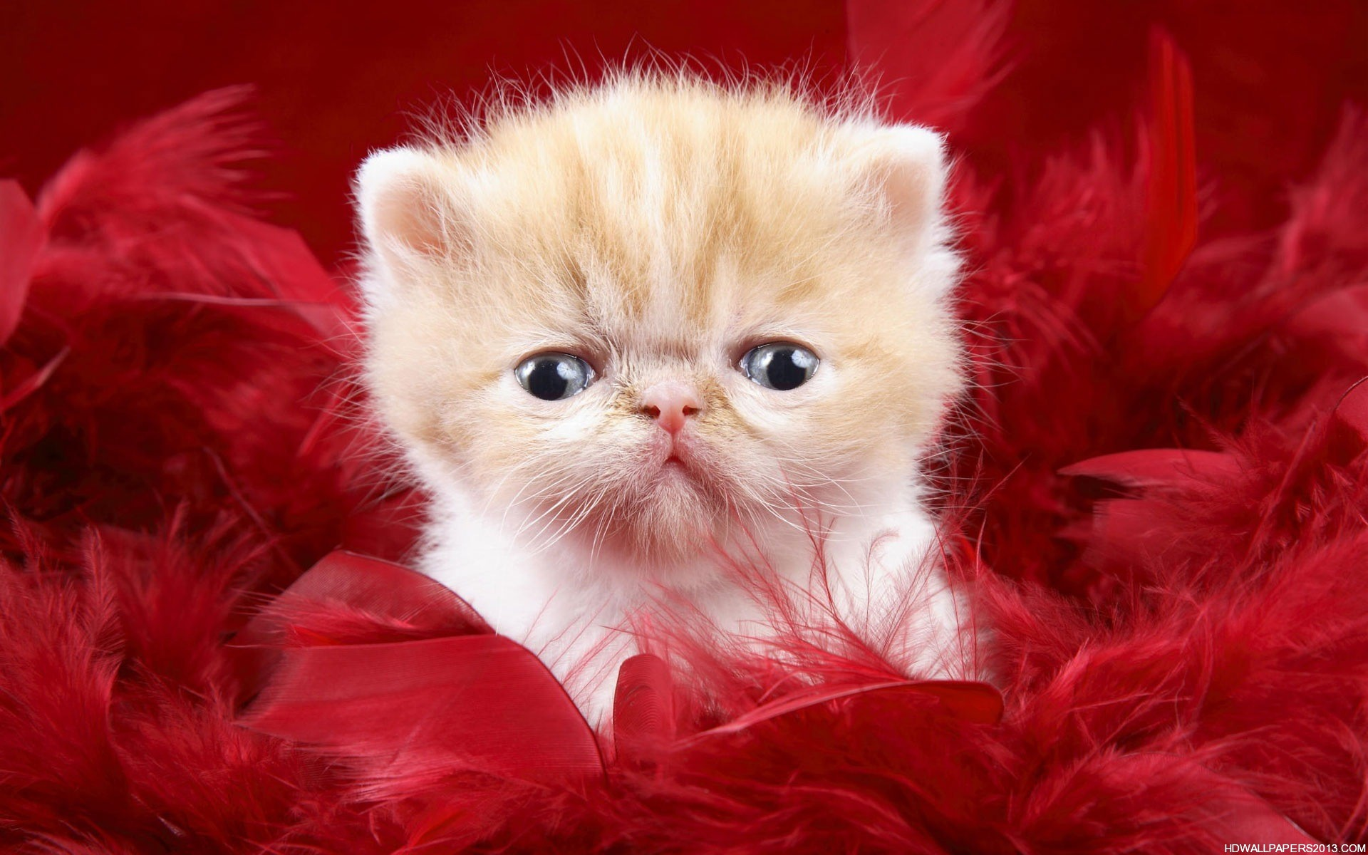 Cute Cat Wallpapers High Definition Wallpapers High Definition