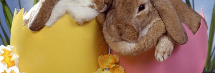 easter-bunny-pictures