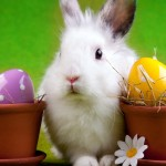 Easter Bunny Wallpaper Desktop