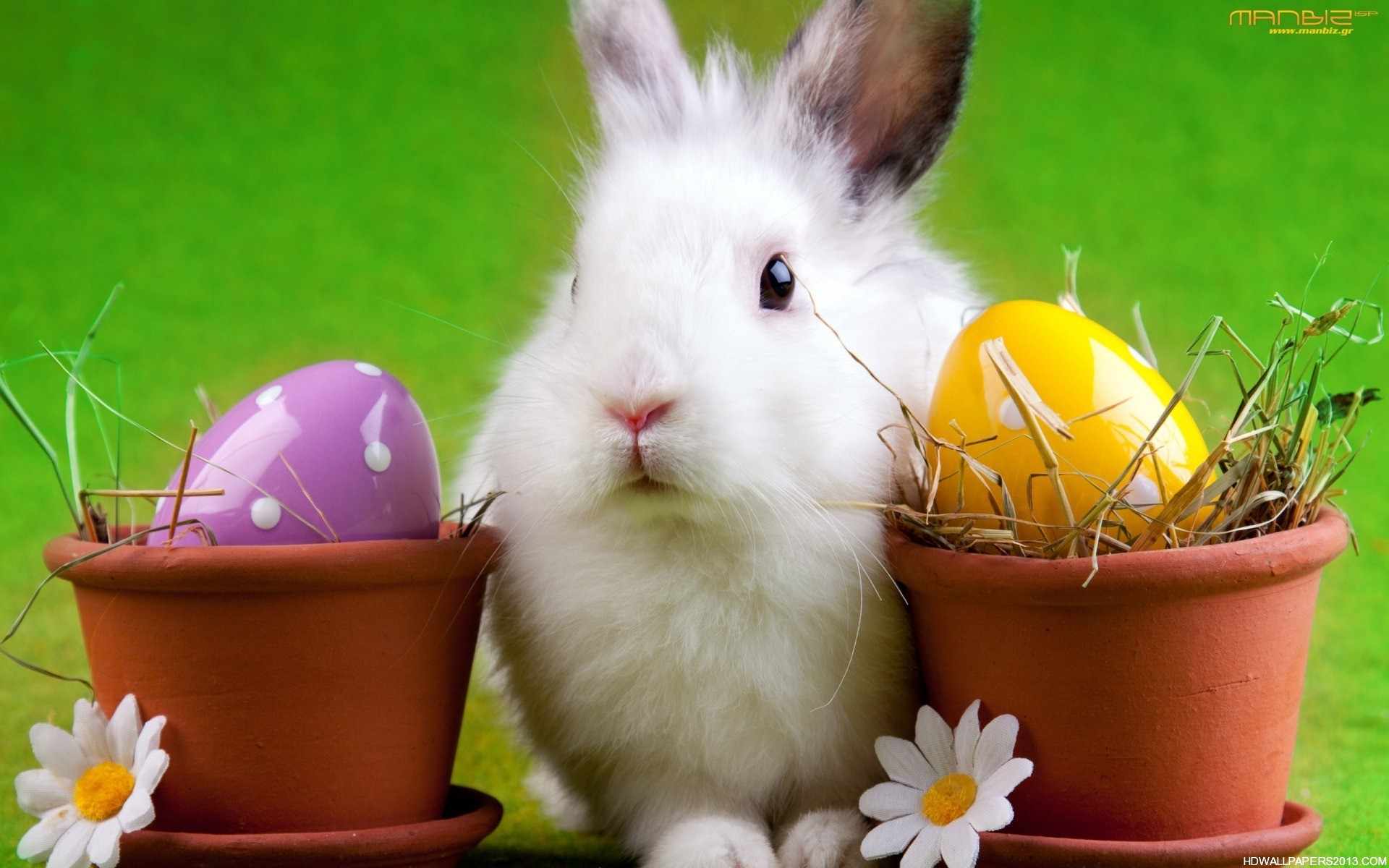 Easter bunny wallpaper desktop high definition wallpapers high easter bunny wallpaper desktop voltagebd Image collections