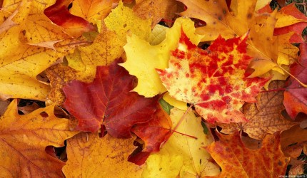 Fall Wallpaper Pictures
