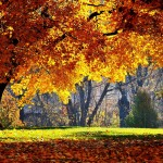 Fall Wallpapers Desktop