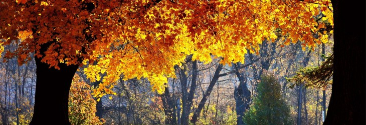 fall-wallpapers-desktop