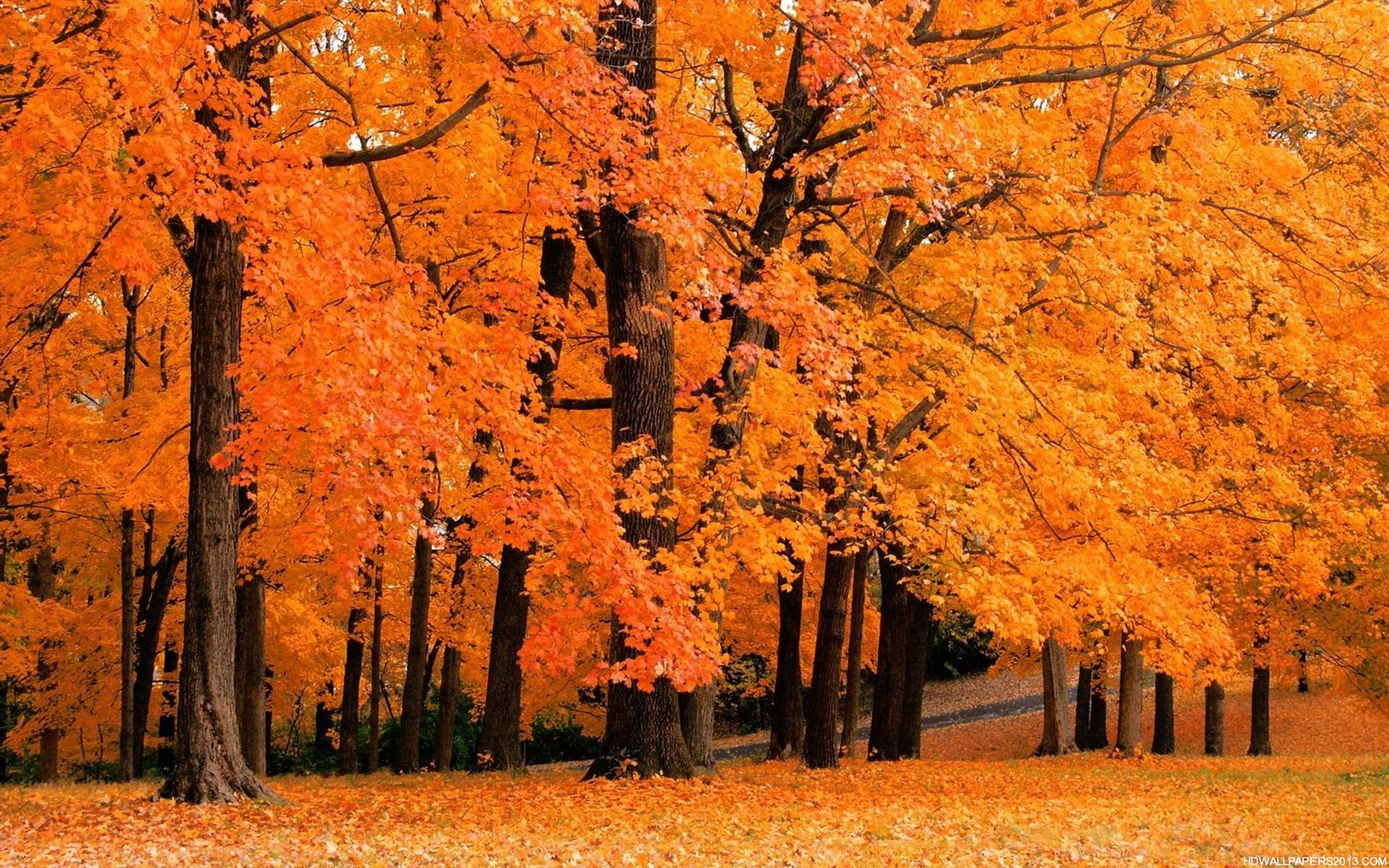 fall wallpapers high definition wallpapers high definition