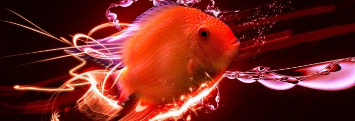 fish-3d-wallpaper