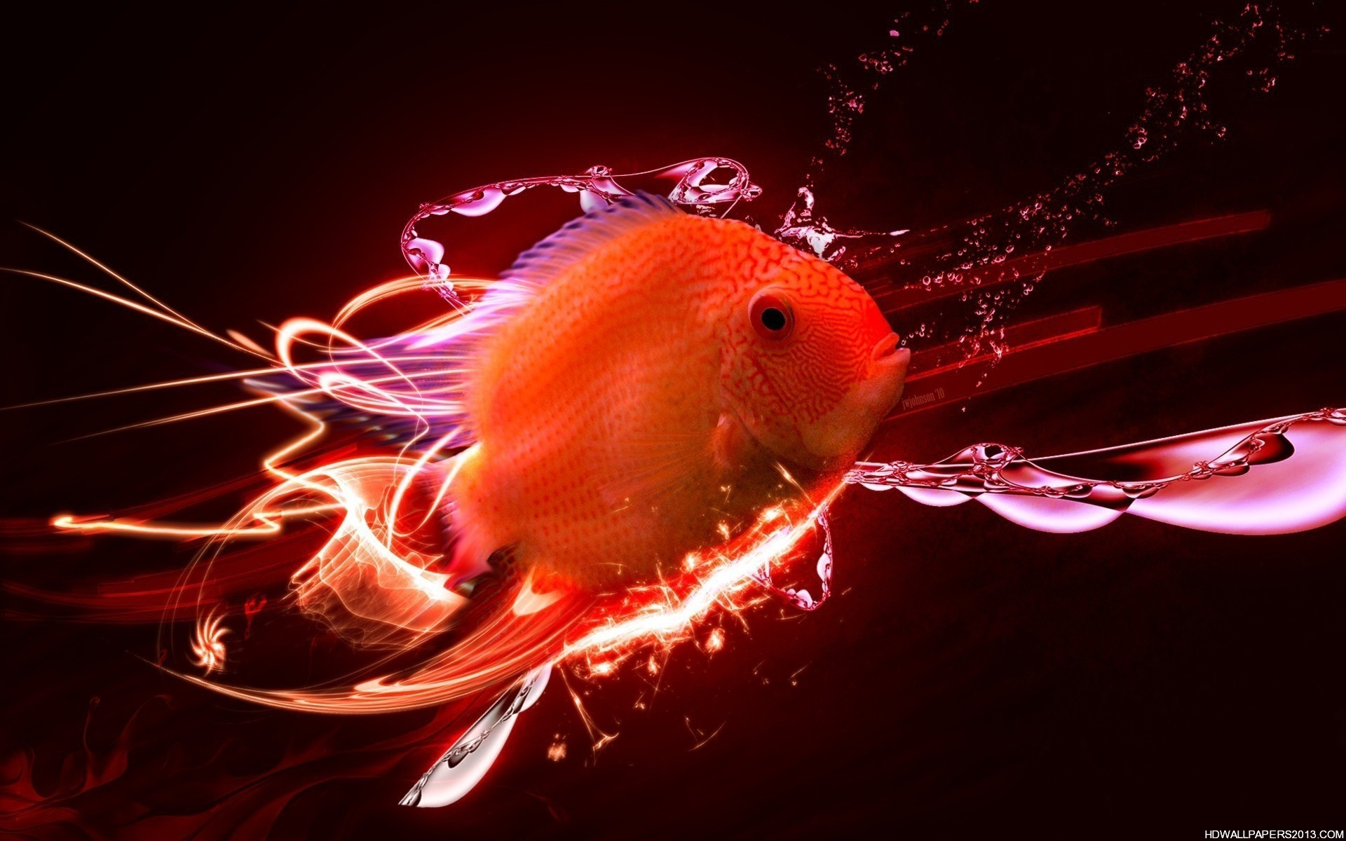 fish 3d wallpaper jpg 307187