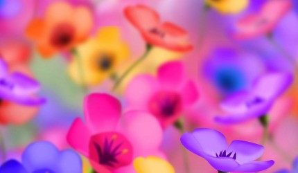 Flower Wallpaper Backgrounds