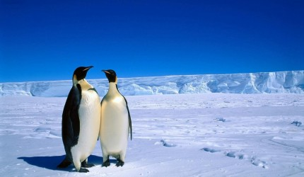 Penguin Wallpaper Download