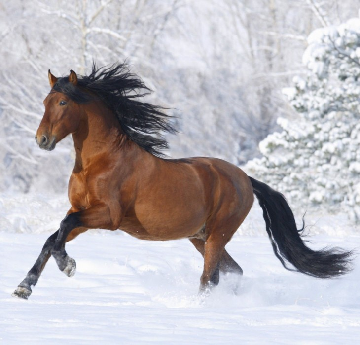 Racing Horse Wallpaper