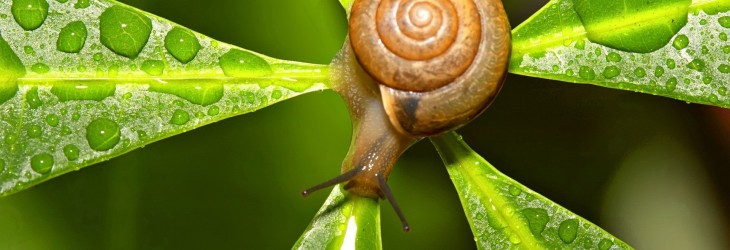 snail-wallpaper
