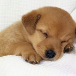 Dog Wallpapers 150x150 Dog Wallpapers