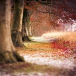 Autumn Trees Wallpaper