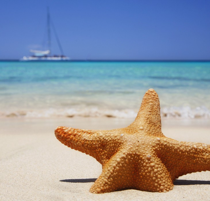 Starfish beach wallpaper