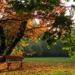 Autum Days Nature Wallpaper