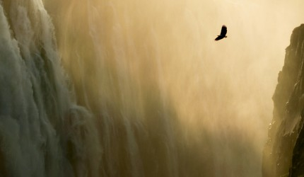 Eagle flying past a waterfall wallpaper