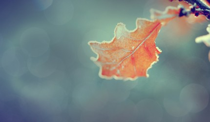 Frosty Autum Leaf Nature Wallaper