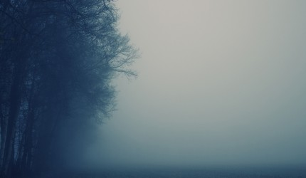 Misty Weather and Trees Wallpaper