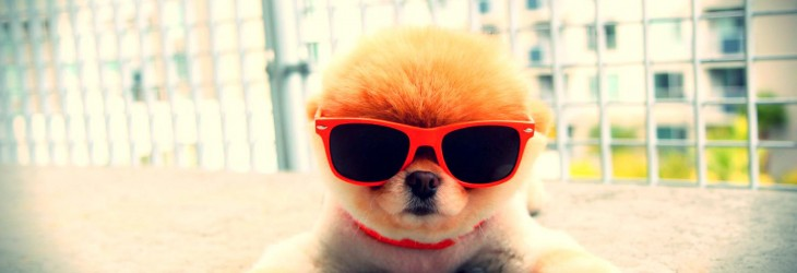 Super Cool Puppy