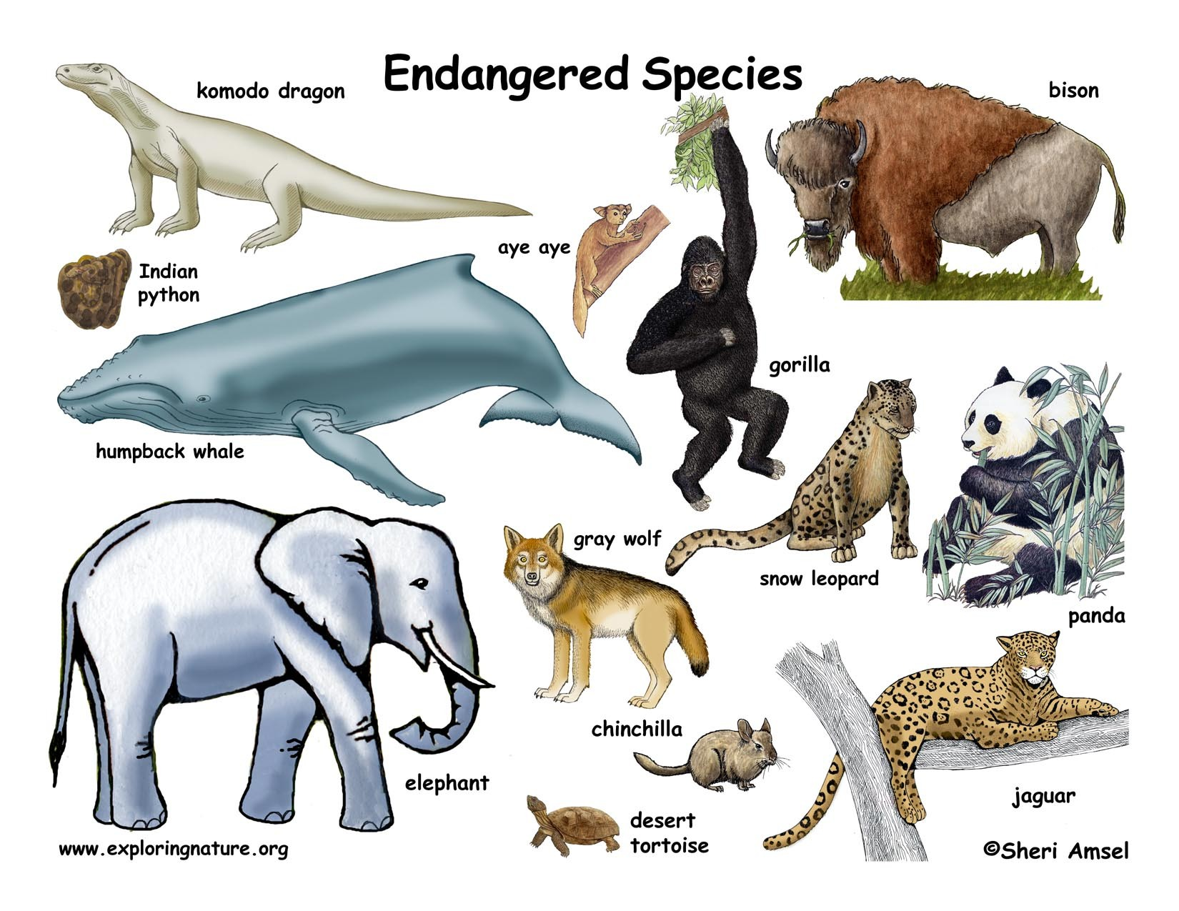 6 Critically Endangered Animals Under Threat of Extinction Due to Human Activity