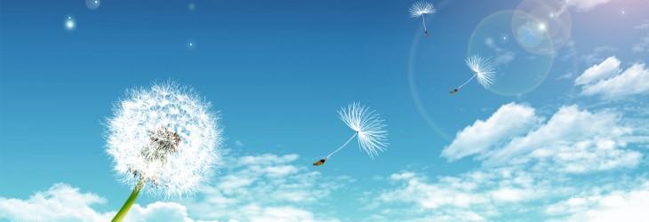 Floating Dandelions
