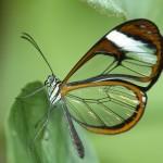 Butterfly Wallpaper Desktop