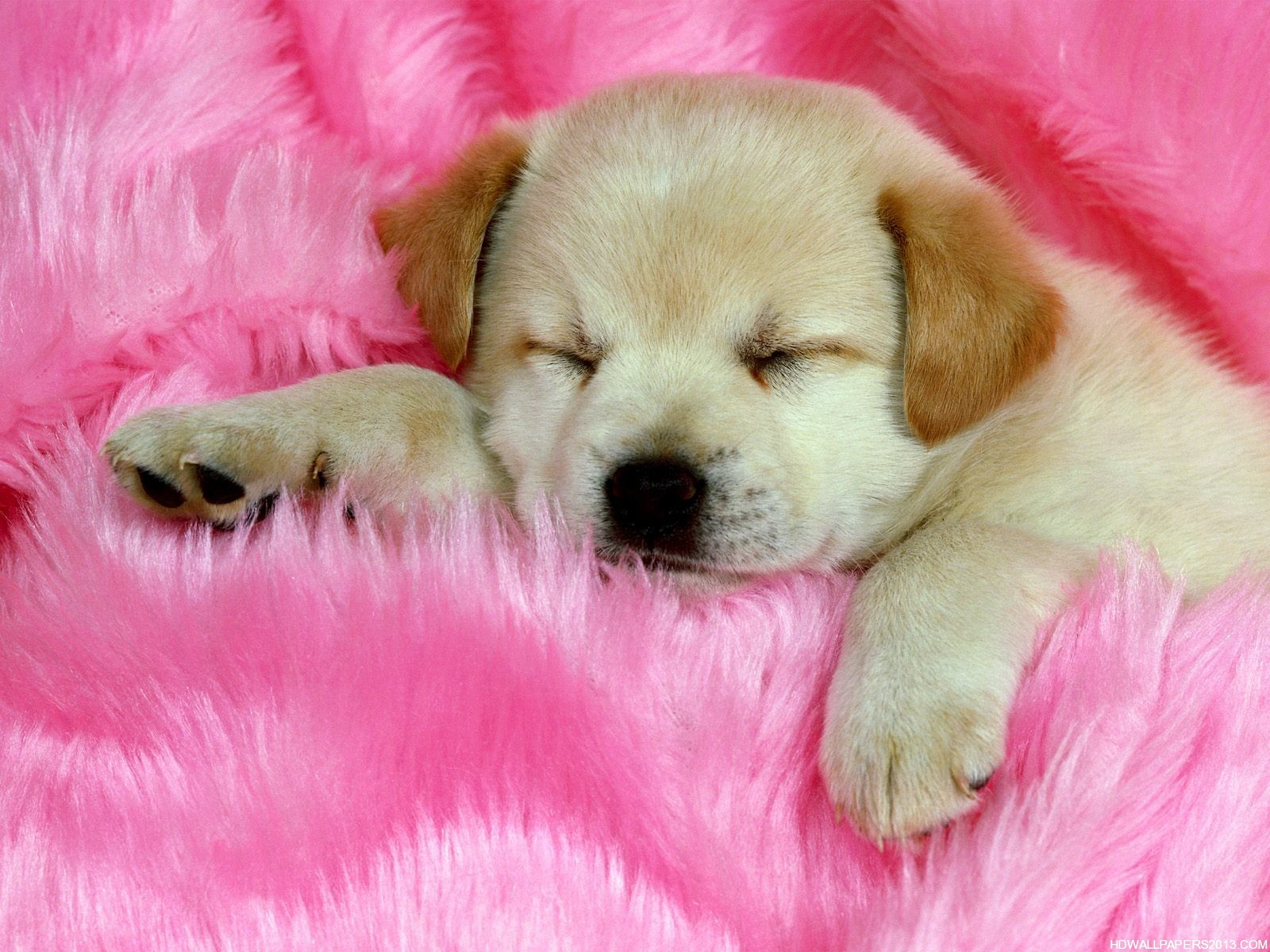 Cute Dogs Wallpapers | High Definition Wallpapers, High ...