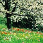Spring Wallpaper HD