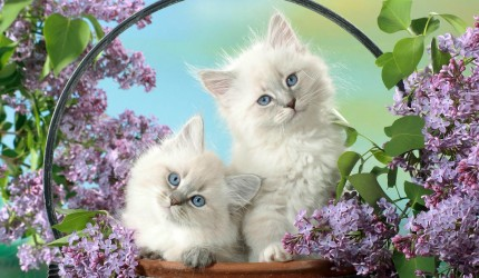Cats Wallpaper Desktop
