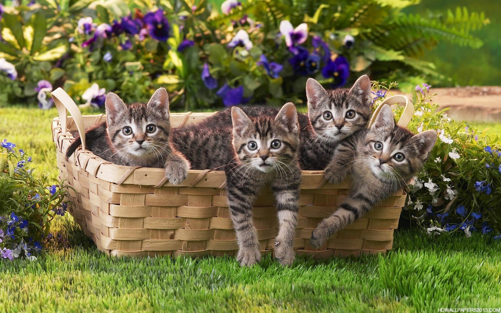 Cats Wallpaper free Download | High Definition Wallpapers, High