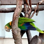 Colorful Parrot Types
