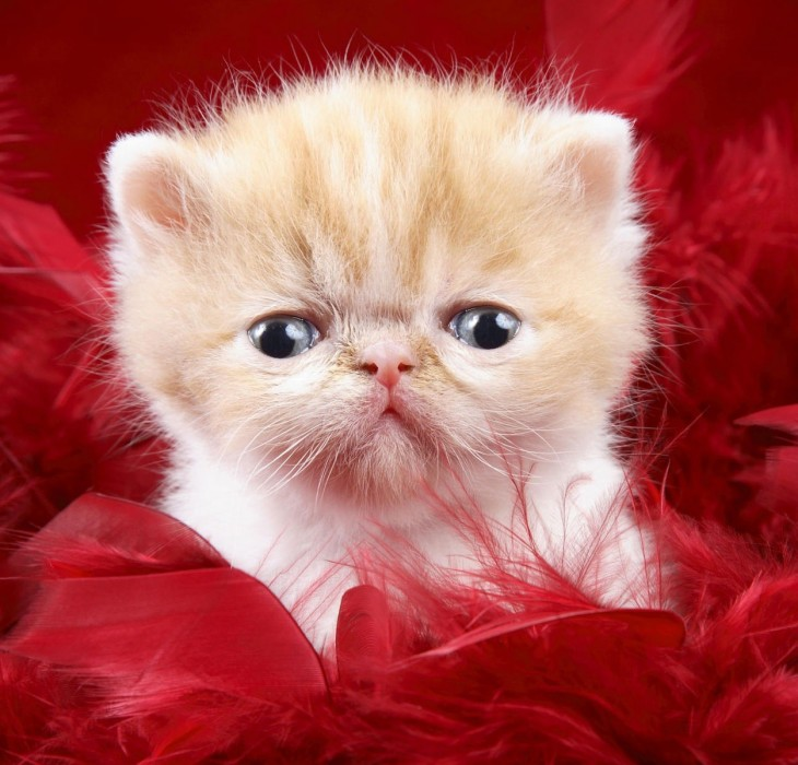 Cute Cat Wallpapers High Definition Wallpapers High
