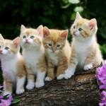 Cute Kitten Desktop Wallpaper