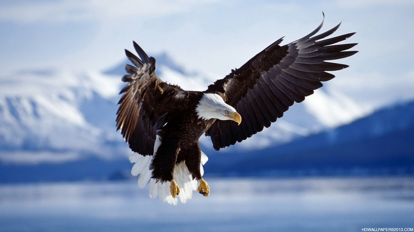 Eagle Wallpaper Hd High Definition Wallpapers High